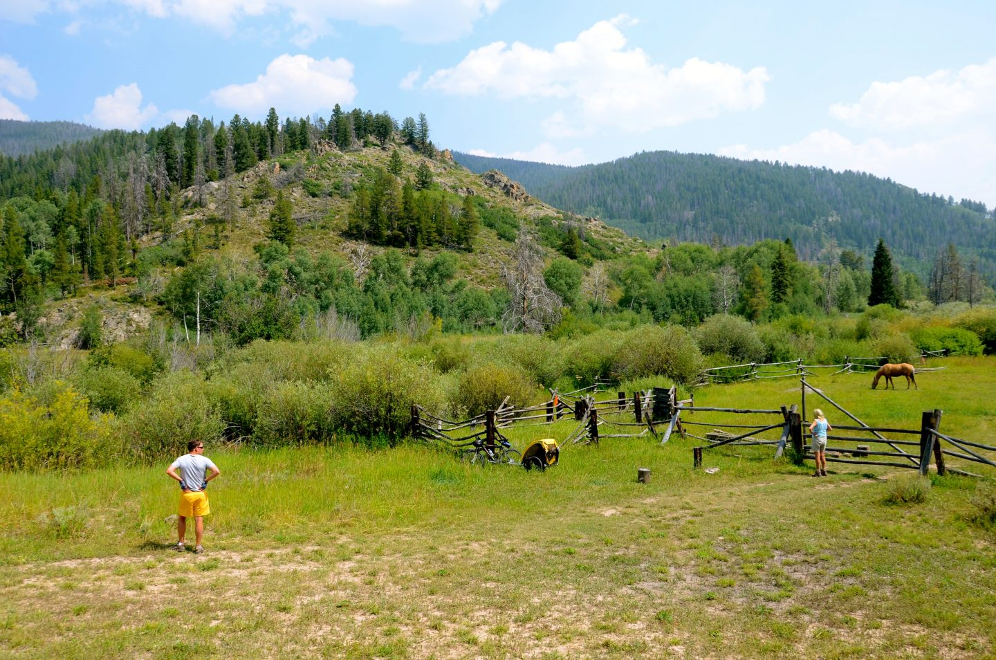 Horse country in Steamboat Springs, CO.