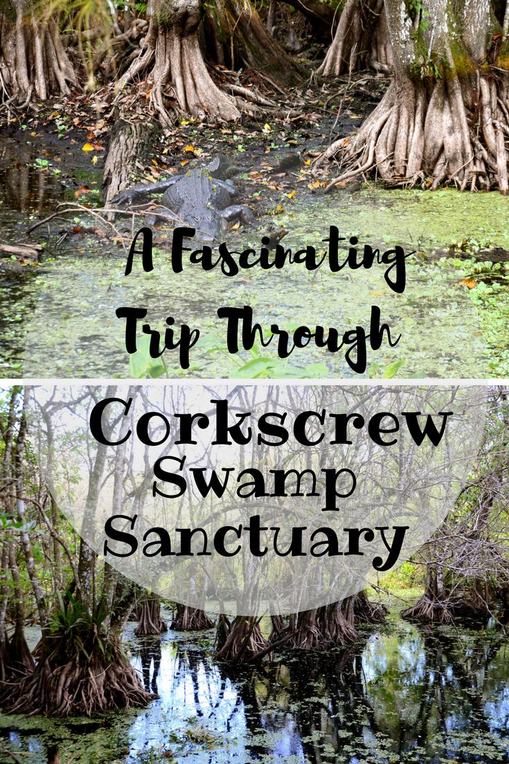 A fascinating trip through Corkscrew Swamp Sanctuary in Naples Florida.