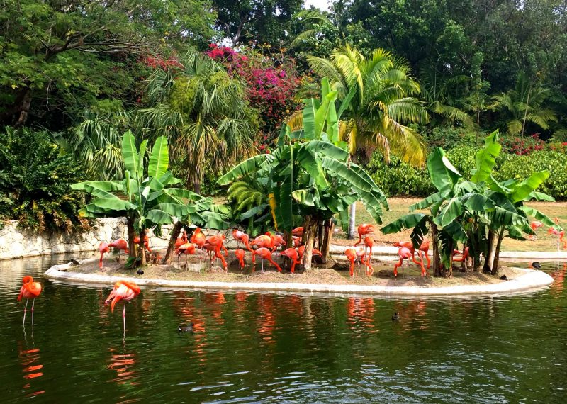 Kids watching the pink flamingos at Jungle Island in Miami.