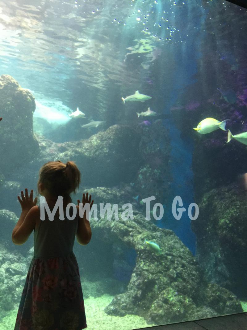 Looking into the aquarium in Hawaii.