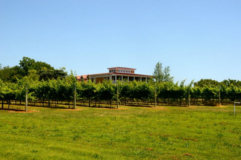 Visiting the Willow Creek wine vineyard in cape May, New Jersey.