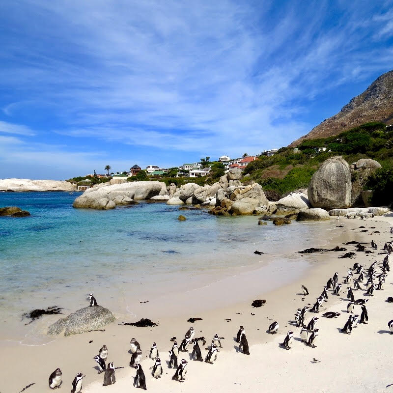 Travel Exchange: Family Vacation to Beautiful and Beachy South Africa