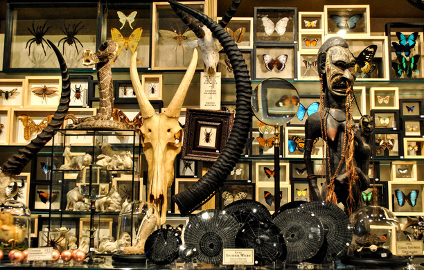 The Evolution Store in New York City