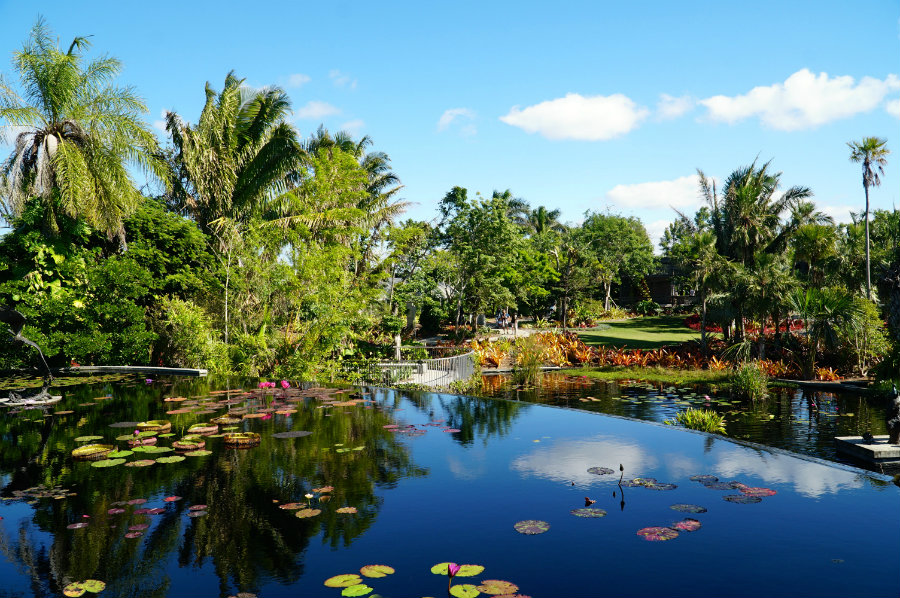 Why You Must Visit The Naples Botanical Garden In Naples Fl